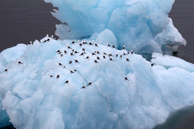 Birds Resting on Iceberg