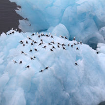 Birds Resting on Iceberg