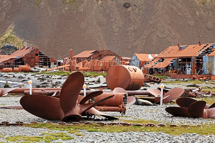 Whaling Station Remains