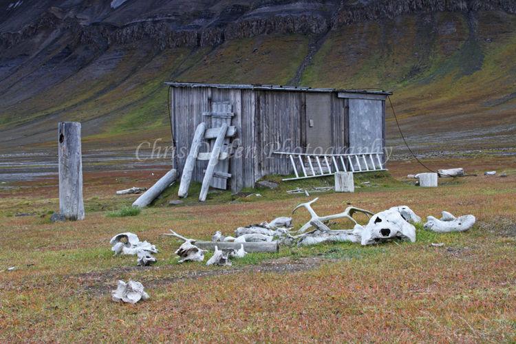 Trapper's Hut and Old Bones