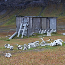 Trapper's Hut and Old Bones