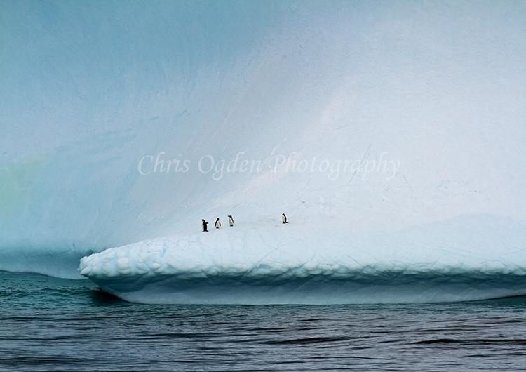 Iceberg #13