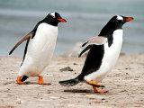 Gentou Penguins #2