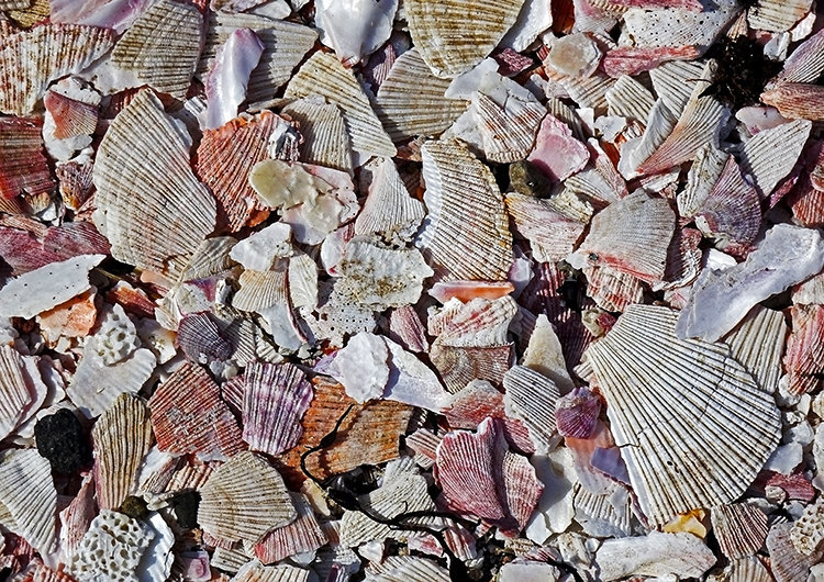 Crushed Seashells #2