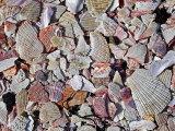 Crushed Seashells #2