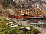 Ships and Seals
