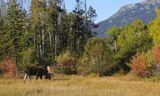 Moose at Moose 4
