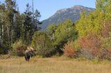 Moose at Moose 5
