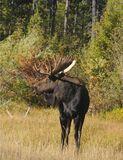 Moose at Moose 7