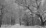 Winter in the Thicket