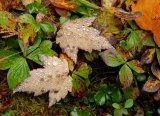 Rain in Maine