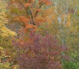 Seasonal Colours