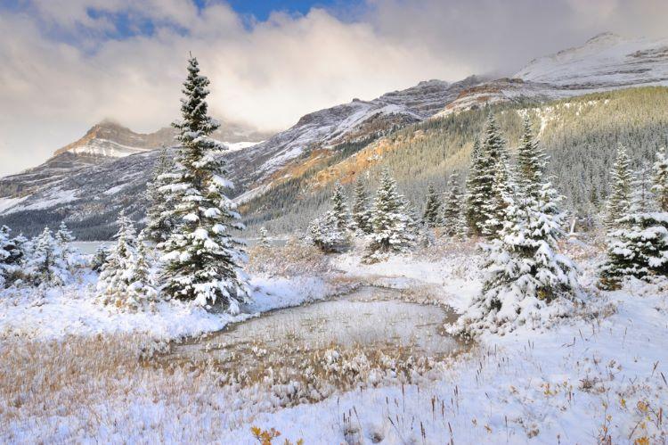 Snowy Trees at Bow Lake