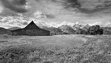 Molton Ranch Momo