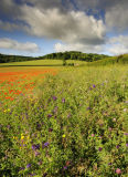 Flower Fields and Woodlands