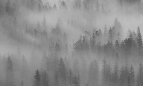 Mist & Trees