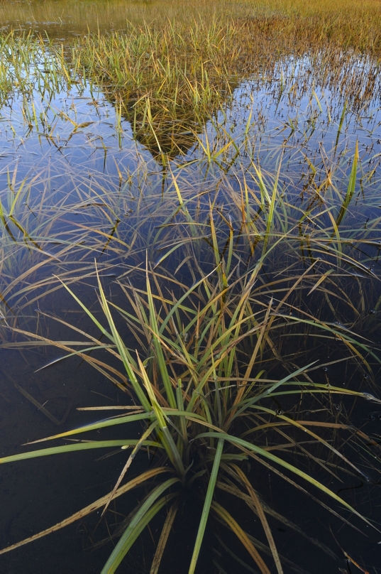 Grass and Reflection