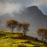 Birch trees and Cuillin