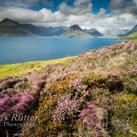 Heather overlooking Loch Scavaig