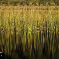 Reed abstract