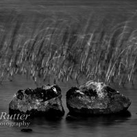 Reeds and rocks
