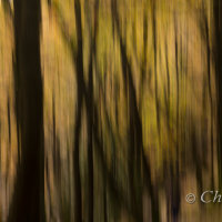 autumn trees impression 1