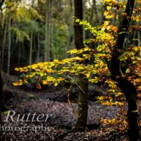 backlit autumn leaves