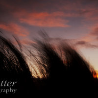 grasses sunrise 1