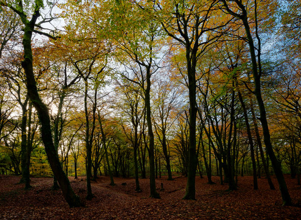 Autumn trees, near Bath