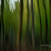trees impression 2
