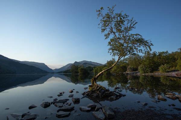 """The Lonely Tree"" of Llyn Padarn, Snowdonia"