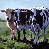 Three Friesians