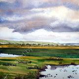 Braunton Marsh