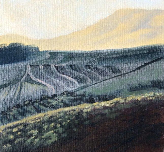 Vineyard, Western Cape