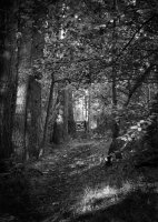 1st Place Prints Through the wood by  David Wright