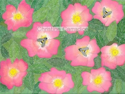 Bees and wild roses