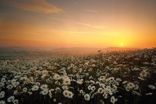 Charlton Down sunrise