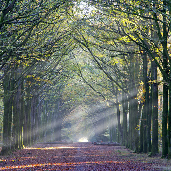 Beams of sunlight, Grovely Wood