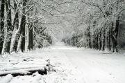 Grovely Wood