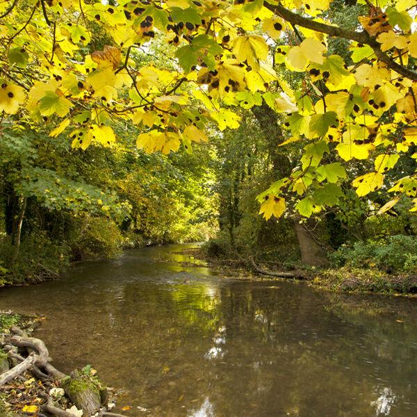 The River Wylye, Heytesbury Mill