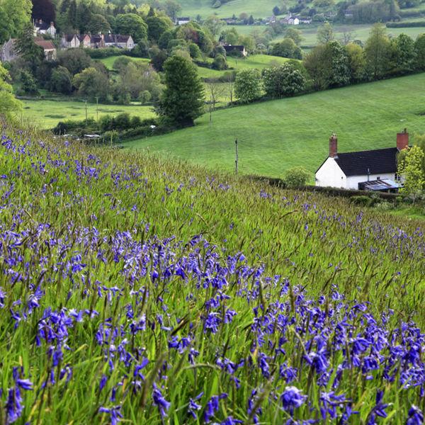 Horningsham, Wiltshire