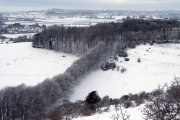 Winter Beech Trees