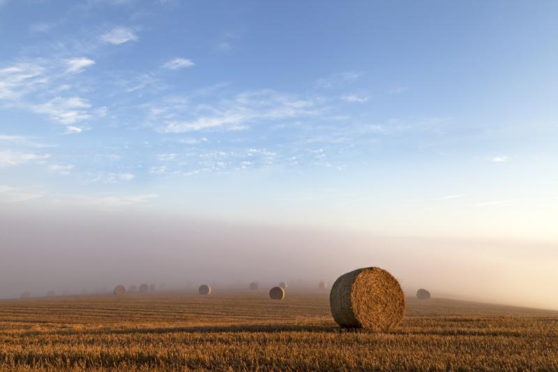 Harvest Mist