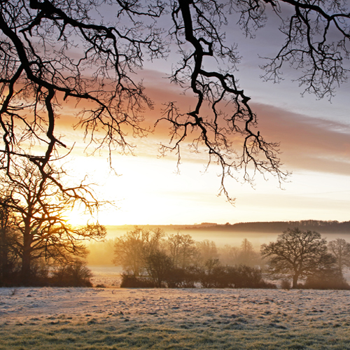Sunrise, Dinton Park