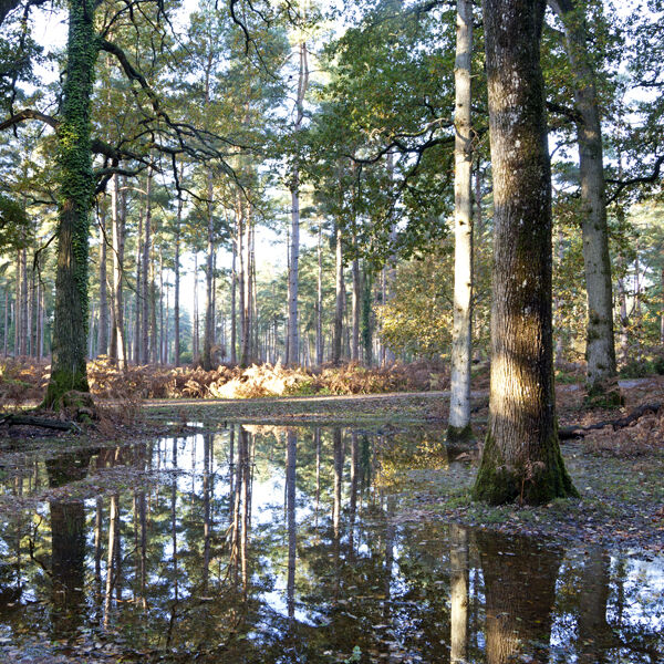 Autumn reflections, the New Forest