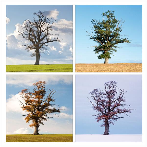 Oak tree, Dorset