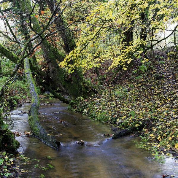 Oddford Brook, Tisbury, Wiltshire