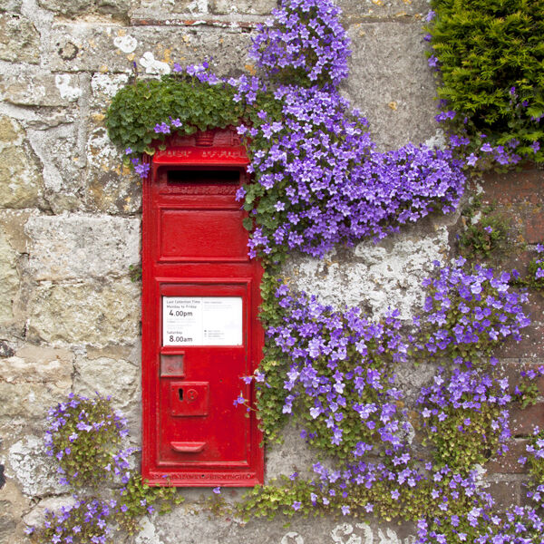Post box and campanula flowers