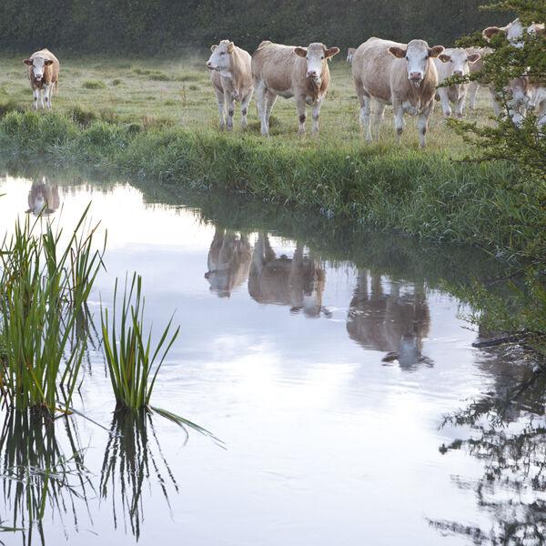 The River Ebble, Odstock