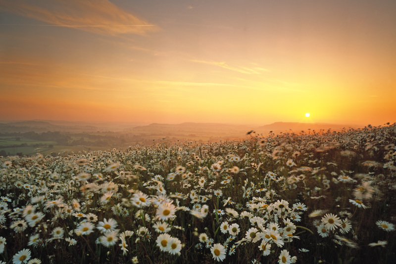 Sunrise and Daisies